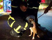 Egy 15 éves fiú okozta a tüzet, amiben 53 kutya égett el elevenen