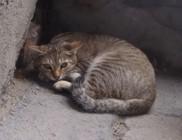 Ablakon kiesett cica mentése