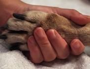 Adományvonalon is támogatható az Állatok megmentése