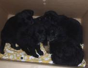 Kiskutyákat dobáltak ki a panelházak közé - állatmentés