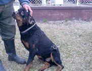 Egy év börtönt kapott a szomszédja kutyáját felgyújtó férfi