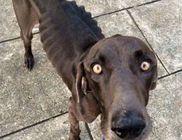 Ágakkal és kavicsokkal volt tele a borzalmas állapotban lévő kutyus gyomra