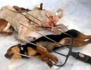 Vasvillával kínoztak meg három kutyát