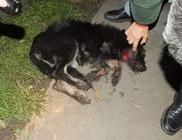 Nyolc hónap börtönt kapott a kutya torkát elvágó férfi