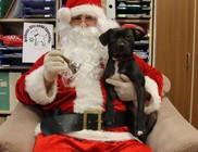 Állatok Karácsonya - Kutyakarácsony az Állatok megmentéséért