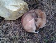 Zsákba kötve, a szakadó esőben hagyták az út szélén a kutyát