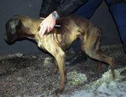 Éheztette a kutyáit egy székesfehérvári férfi