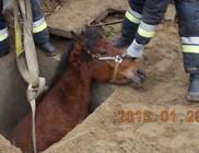 Sikeresen kimentésre került a vízaknába esett ló