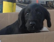 Megmentettük a vasútállomáson kidobott kutyust