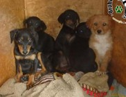 Utcára kidobált kutyusok mentése