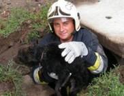 Bravúros kutyamentés a csatornából