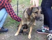Élve temették el a kutyakölyköket - diákok mentették meg őket