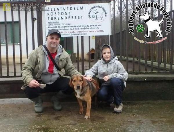 Állatbarátok Szja egy százalék felajánlásának is köszönhetően Andro szerető Gazdihoz került