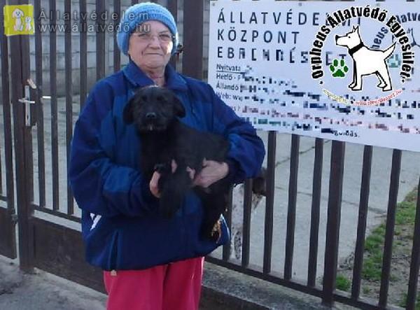Állatbarátok adó 1 százalék felajánlásának is köszönhetően szerető Gazdihoz került Tib