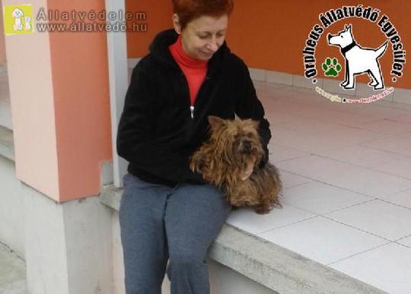 Az Szja 1% felajánlásoknak is köszönhetően Brúnó szerető Gazdihoz került