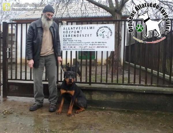 Kyra az állatbarátok adóegyszázalékának köszönhetően Gazdihoz került