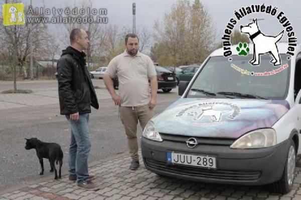 Állatmentő autó adomány, állatmentésre