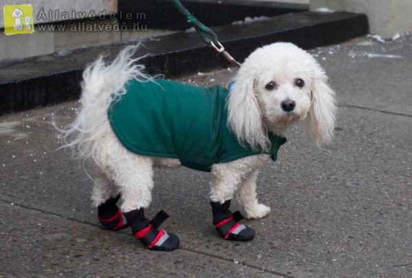 Kutyaruha, a fagyos hidegben életmentő