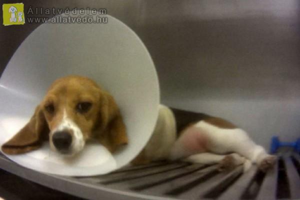 Beteg kutya