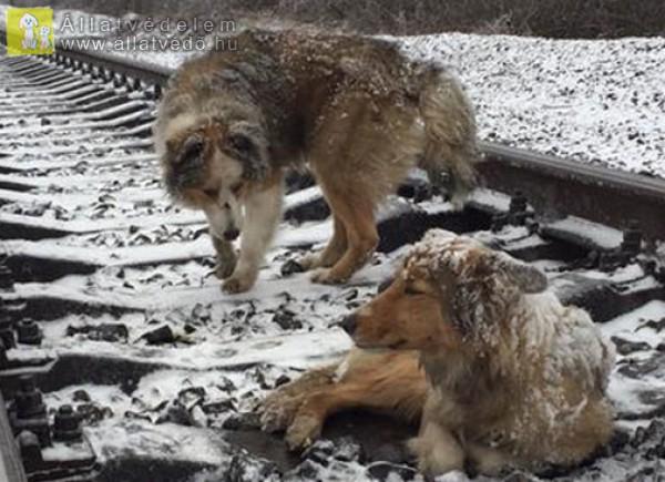 Fagyos kutyák
