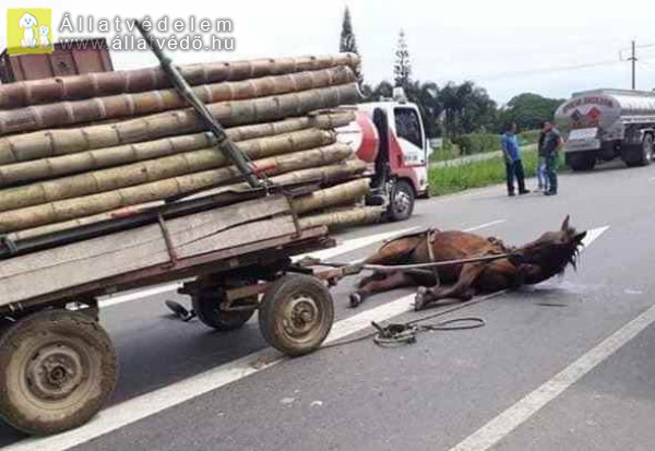 Ló baleset, túlterhelés