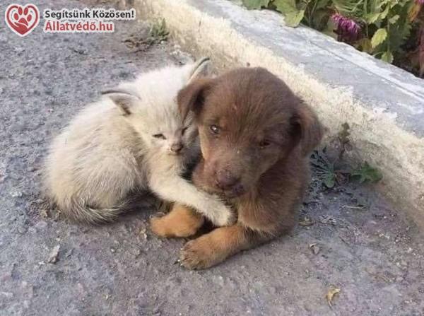 Kidobott kutya, kóbor cica