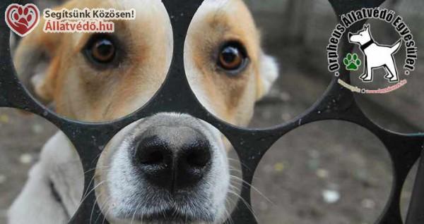 Kutyamentés szja 1% támogatása - Orpheus Állatvédő Egyesület