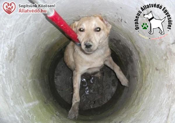 Állatmentés - Orpheus Állatvédő Egyesület szja 1% támogatás