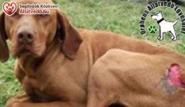 Állatvédelem - Orpheus Állatvédő Egyesület szja 1% támogatás