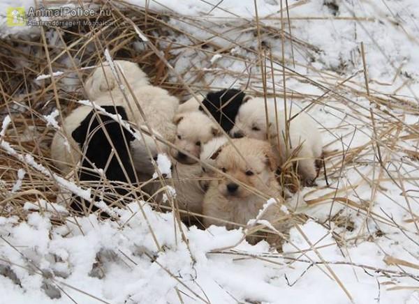 A 11 testvért állatbarátok egy erdőnél találták