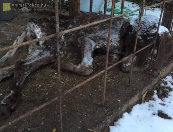 Állatkínzás, földhöz fagyott kutya