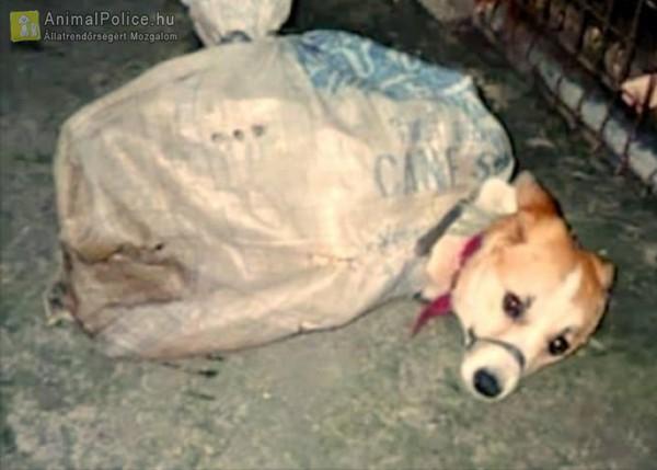 Állatkínzás: zsákba kötötték...