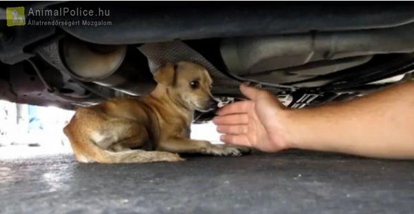 Autó alá került kutyus mentése