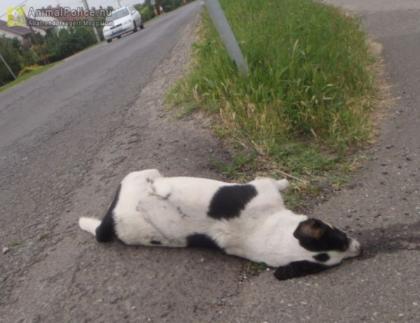 Elgázolt kutya teteme az út szélén