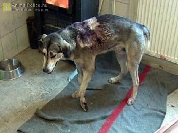 Hajléktalanok bántották a kutyust, letöltendőt kaptak