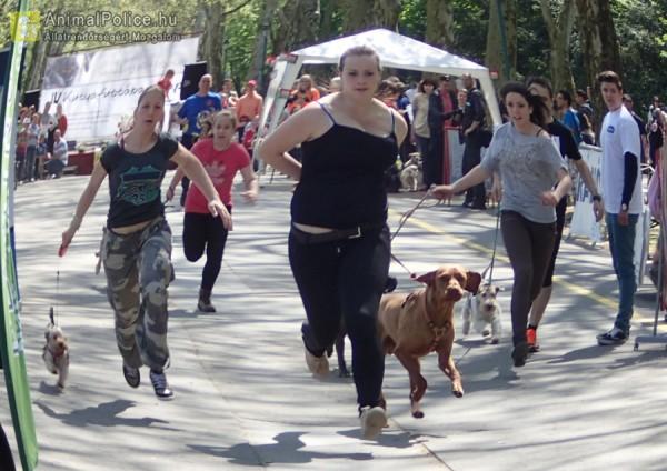 IV kutyafuttában napon - kutyások futnak