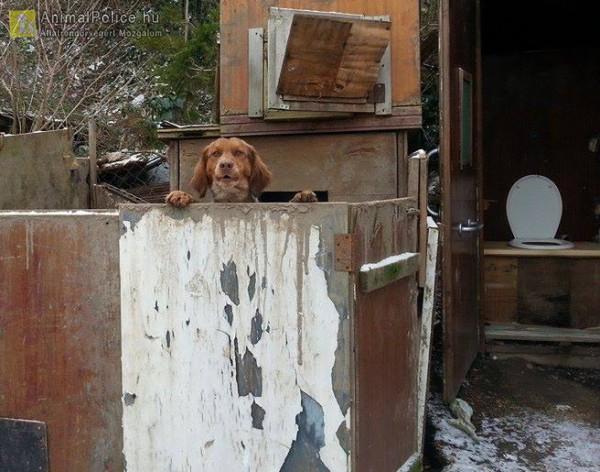 Igénytelen kutyatartás