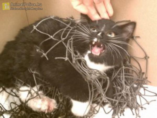 Hálóba gabalyodott cica megmentése