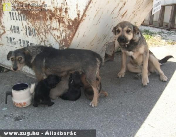 Kuka mellett született kiskutyákat szoptat az anyjuk