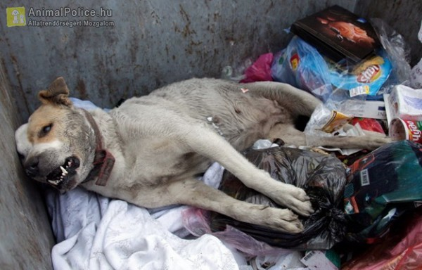 Kukába dobták az elhullott kutya tetemét