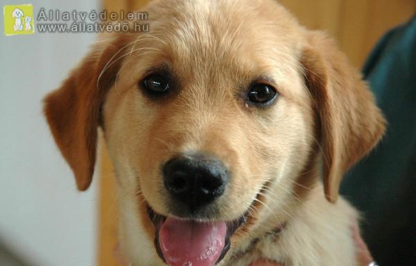 Kutyaterápiás kutya