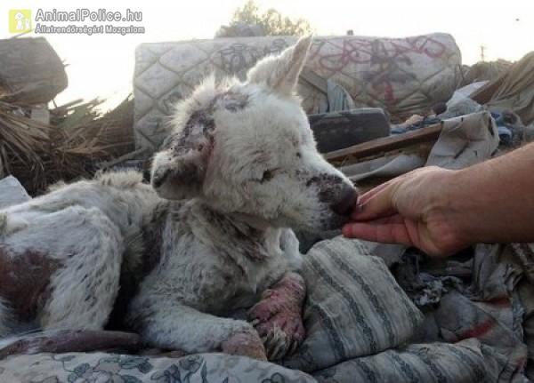 Rühes kutya mentés szemétdombról