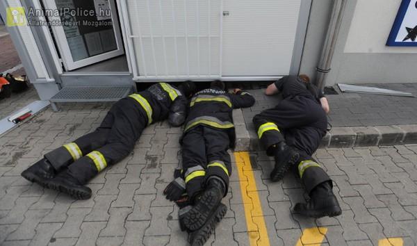 Tűzoltók dolgoznak egy beszorult cica megmentésén