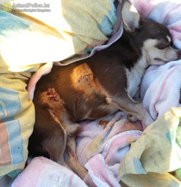 Utcán két kutya marcangolta halálra