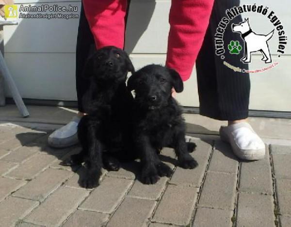 Utcáról mentett kutyusok