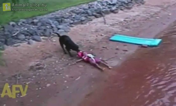 Vízbe fulladt embert mentett ki a kutya