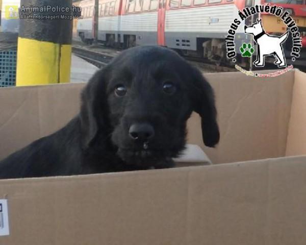 Vonatállomásról megmentett kutyus
