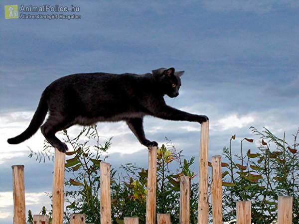 A cicák szeretik az extrém helyeket