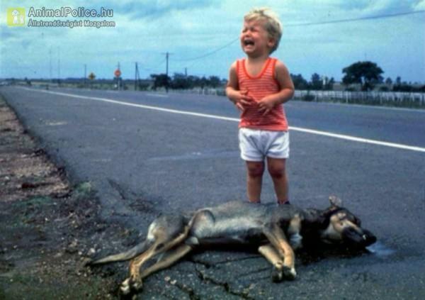 A kisfiú látta, ahogyan elüti egy autó a kutyáját