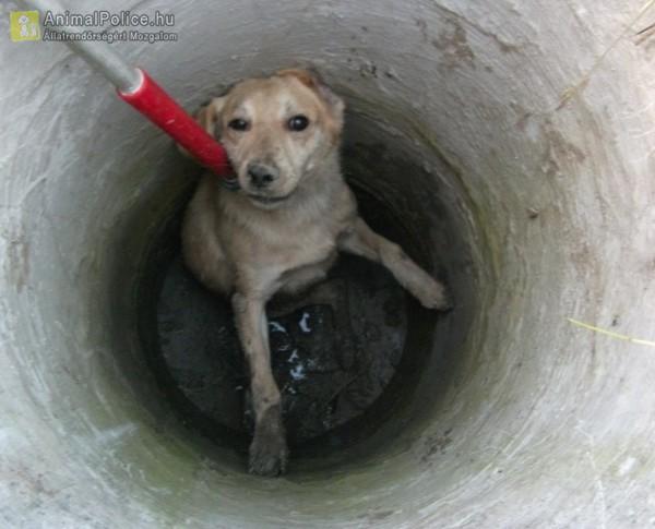 Kútba esett kutyust ment az Orpheus Állatvédő Egyesület